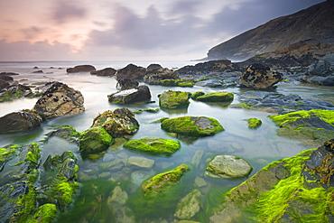 Vibrant green algae exposed at low tide at Tregardock Beach, North Cornwall, England, United Kingdom, Europe