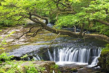 The Nedd Fechan River at Horseshoe Falls, Brecon Beacons National Park, Mid Glamorgan, Wales, United Kingdom, Europe