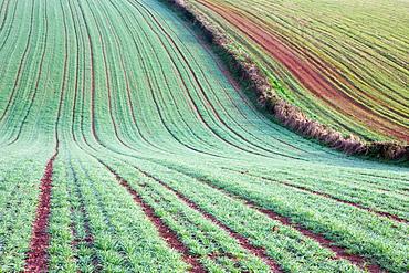 Thawing frost on rolling farmland, near Crediton, Devon, England, United Kingdom, Europe