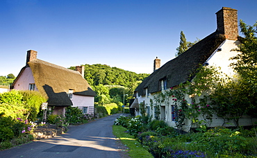 Thatched cottages in the medieval village of Dunster, Exmoor National Park, Somerset, England, United Kingdom, Europe