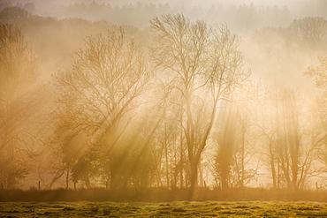 Sunlight bursting through mist covered trees in winter, near Okehampton, Devon, England, United Kingdom, Europe