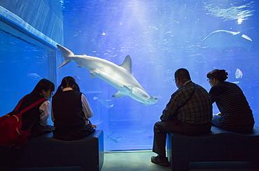 People watching shark at Osaka Aquarium, Tempozan, Osaka, Kansai, Japan, Asia