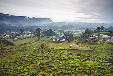 Tea plantation, Nuwara Eliya, Sri Lanka, Asia