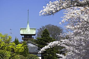 Cherry blossom along lane of Southern Higashiyama and Daiunin temple, Kyoto, Kansai, Japan, Asia