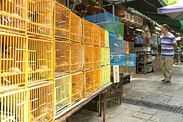 Bird Market, Mong Kok, Kowloon, Hong Kong, China, Asia