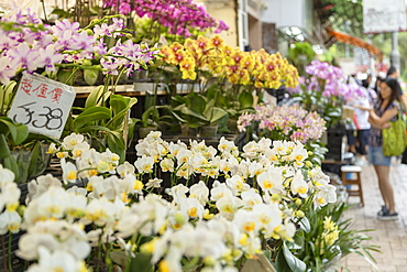 Orchids at Flower Market, Mong Kok, Kowloon, Hong Kong, China, Asia