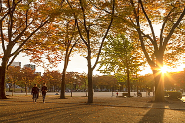 Autumn colours in Shirakawa Park, Nagoya, Honshu, Japan, Asia
