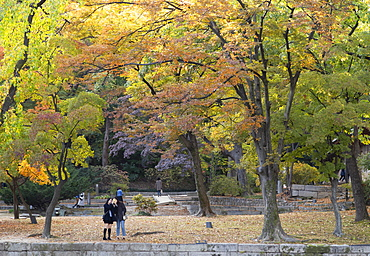 Secret Garden in Changdeokgung Palace, UNESCO World Heritage Site, Seoul, South Korea, Asia