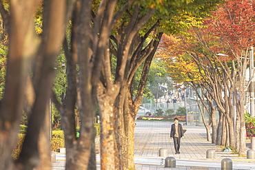 Man walking past autumnal trees, Gangnam-gu, Seoul, South Korea, Asia