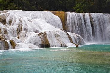 Waterfalls, Rio Tulija, Aqua Azul National Park, near Palenque, Chiapas, Mexico, North America