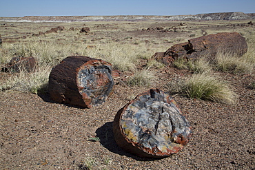 Petrified logs from the late Triassic period, 225 million years ago, Long Logs Trail, Petrified Forest National Park, Arizona, United States of America, North America
