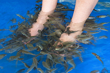 Fish foot massage, Siem Reap, Cambodia, Indochina, Southeast Asia, Asia