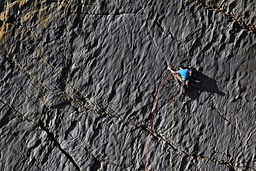 A climber scaling cliffs at Lower Sharpnose Point, near Bude, Cornwall, England, United Kingdom, Europe