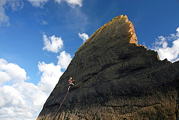 Rock climber in action, Culm Coast, North Devon, England, United Kingdom, Europe