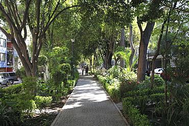 Pedestrian walkway, Colonia Condesa, La Condesa, a trendy neighborhood, Mexico City, Mexico, North America