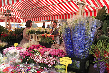 Flower Market, Cours Saleya, Old Town, Nice, Alpes Maritimes, Provence, Cote d'Azur, French Riviera, France, Europe