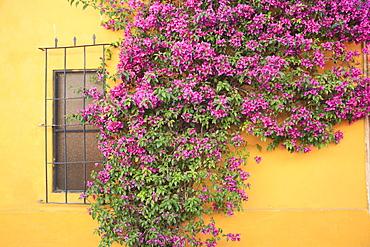 Tequisquipan, Queretaro state, Mexico, North America