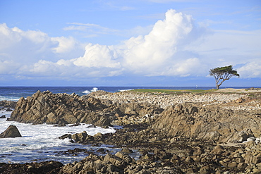 Rocky coastline and Monterey cypress tree, 17 Mile Drive, Pebble Beach, Monterey Peninsula, Pacific Ocean, California, United States of America, North America