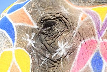 Painted elephant, Amber Fort Palace, Jaipur Rajasthan, India, Asia - 807-79