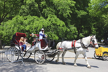 Horse and buggy, Central Park, Manhattan, New York City, New York, United States of America, North America