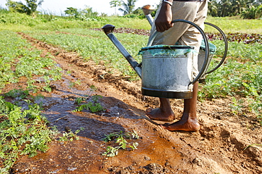 Farmer with watering can, near Lome, Togo, West Africa, Africa