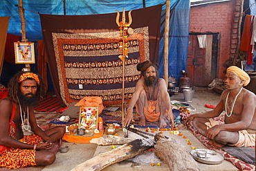 Naga sadhus in their akhara at the Kumbh Mela in Hardwar, Uttarakhand, India, Asia