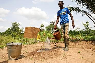 Man watering plants, Tori, Benin, West Africa, Africa