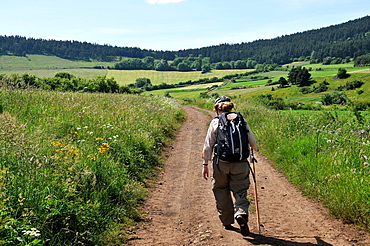Pilgrim walking on the Way of St. James, Christian pilgrimage route towards Saint-Jacques-de-Compostelle (Santiago de Compostela), Languedoc-Roussillon, France, Europe