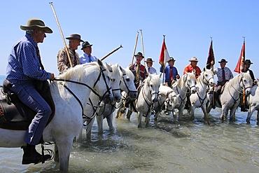 Guardians on horseback escorting the procession to the sea, Gypsy pilgrimage at Les Saintes-Maries-de-la-Mer, Bouches du Rhone, France, Europe