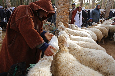 Weekly cattle market in Douz, southern Tunisia, North Africa, Africa