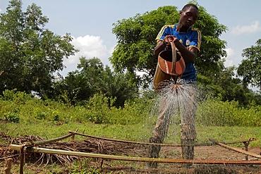 Watering the garden on a farm, Tori, Benin, West Africa, Africa