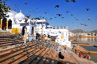 Ghats at Holy Pushkar Lake and old Rajput Palaces, Pushkar, Rajasthan, India, Asia