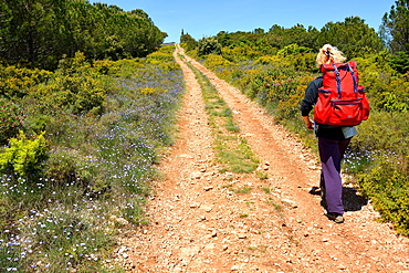 Pilgrim walking on St. James's Way, St. Guilhem le Desert, Herault, Languedoc, France, Europe