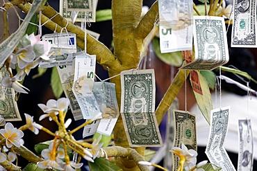 Buddhist money tree to make merit and donate to local temple, Wat Velouvanaram, Bussy Saint Georges, Seine et Marne, France, Europe