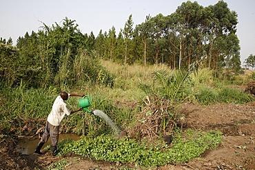 Farmer Apollo Byarunga received two loans from ENCOT microfinance, Uganda, Africa