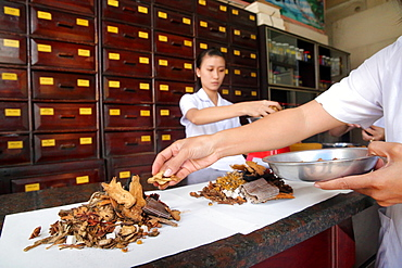 Traditional Chinese medicine pharmacy, herbal medicine therapy, Ho Chi Minh City, Vietnam, Indochina, Southeast Asia, Asia
