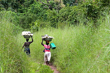 Women carrying platter with cassava on head, Togo, West Africa, Africa