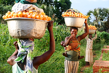 Women carrying platter with corn on head, Sotouboua, Togo, West Africa, Africa