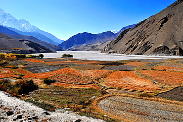 Terraced barley fields near Kagbeni, Mustang, Nepal, Himalayas, Asia
