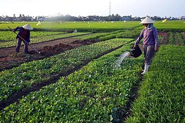 A farmer waters her vegetable farm, Hoi An, Vietnam, Indochina, Southeast Asia, Asia