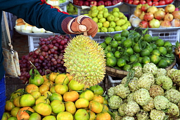 Woman buying durian from tropical fruit stall in Morning market in Duong Dong town, Phu Quoc, Vietnam, Indochina, Southeast Asia, Asia