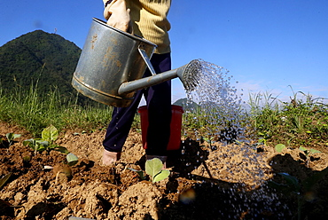 Farmer watering vegetables in the field, Bac Son, Vietnam, Indochina, Southeast Asia, Asia