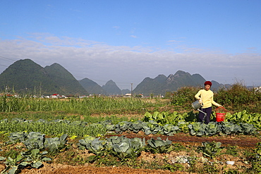 Farmer watering vegetable in the field, Bac Son, Vietnam, Indochina, Southeast Asia, Asia