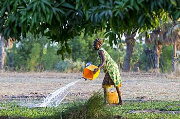 Member of a women's cooperative watering a field in Karsome, Togo, West Africa, Africa