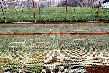Vegetable farm, greenhouse, Dalat, Vietnam, Indochina, Southeast Asia, Asia