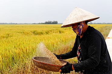 Woman winnowing rice, Hoi An, Vietnam, Indochina, Southeast Asia, Asia