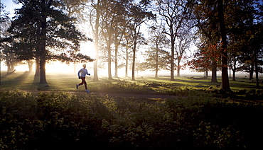 Early morning runner, Richmond Park, London, England, United Kingdom, Europe