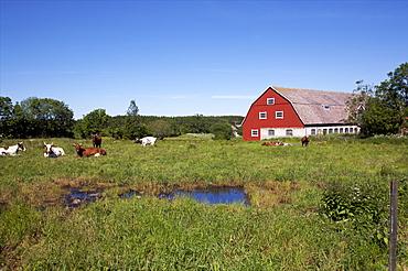 A big farm on the archipelago of Aland, Finland, Scandinavia, Europe