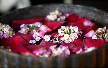 Hibiscus and paradise lotus flowers in a teak water container, used to wash the hands, Thailand, Southeast Asia, Asia