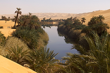 In the erg of Ubari, the Umm-el Ma (Mother of the Waters) Lake, Libya, North Africa, Africa